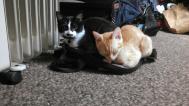 Little kitten bros.